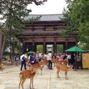 5_Nara_Park_Deer_Japan
