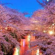 hanami-night-1170x658