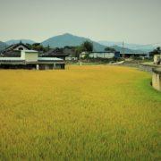 rice-2812395_960_720