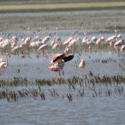 flamingo-2794001_960_720