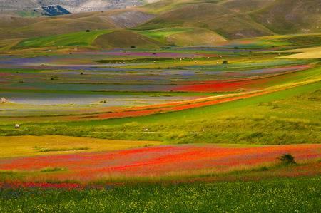 60457030-castelluccio-di-norcia-en-umbría-durante-el-verano-de-floración