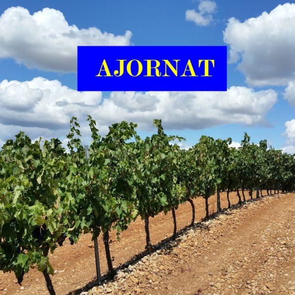 vineyard-1014890_1920