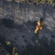 vulture-4524066_960_720
